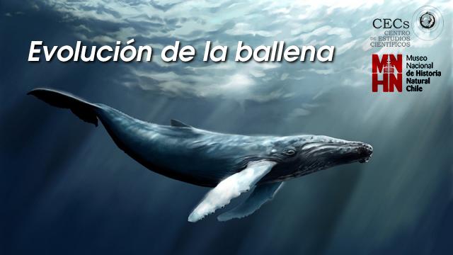 Exposición: Cetáceos de la tierra al mar